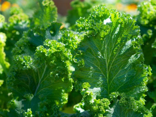 Harmony reigns with organic vegetables