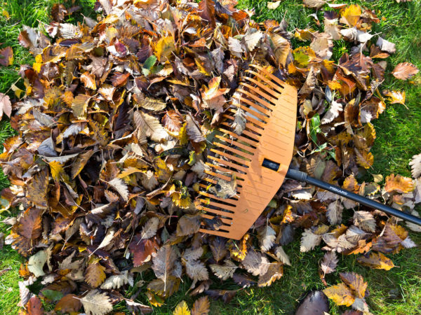 It's time for Leaf Clean Up